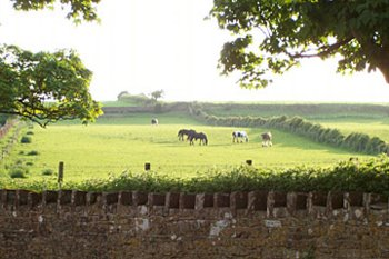 Horses and field